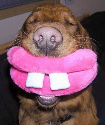 funny-dog.jpg